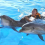 Can You Swim With Dolphins in Florida?